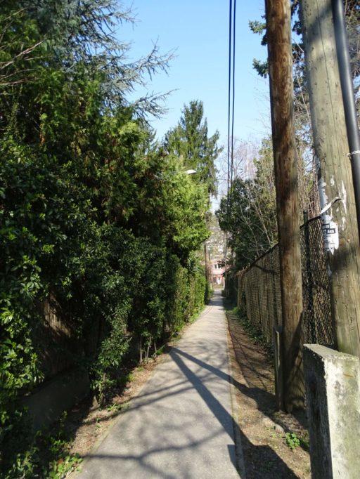 Hallássérültek fogadtak örökbe egy ismert utcát